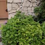 風水で運気アップ! 玄関と植物について