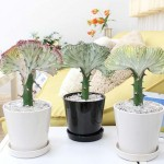 観葉植物で飲食店の気をぱんぱんに張らせる風水術