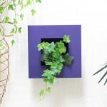 観葉植物としてアイビーと風水的に上手く付き合う方法