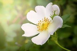 wild-flower-1330508__180